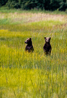 2-Grizzly-Cubs-JB7000