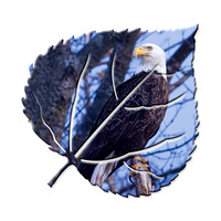 bald-eagle-on-aspen-1
