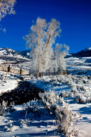Winter-in-Yellowstone-JB3007